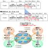 【図解】SPB-Mの概要 (IEEE802.1ad〜IEEE802.1ah〜IEEE802.1aq)